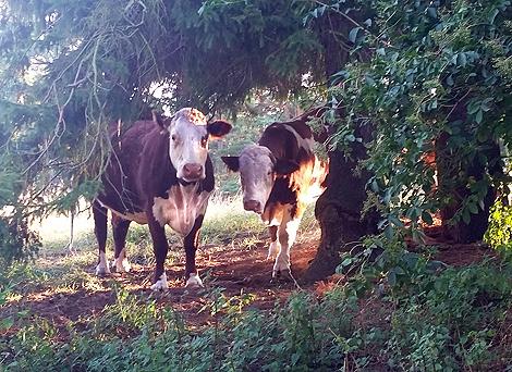 Kor på vift