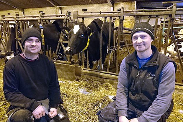 Bröderna Stefan och Jonas Andersson samt en av de 110 korna på Assargården i Glumslöv. Foto: Sven-Olof Birgersson