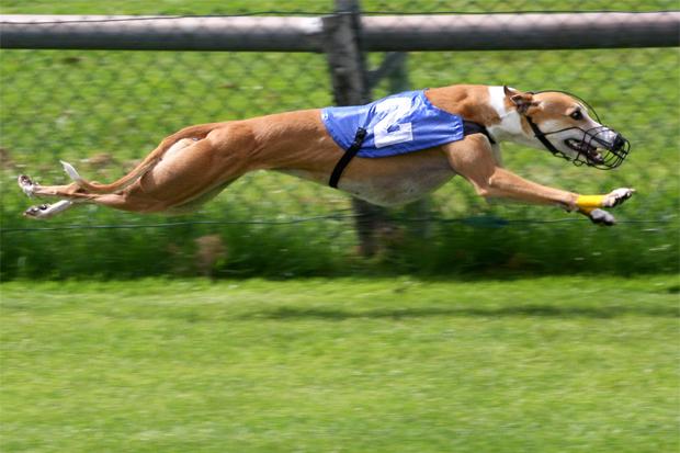 Hundkapplöpningsbanan flyttas