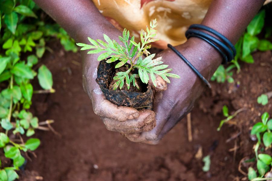 Vi-skogen är en svensk biståndsorganisation som genom trädplantering och stöd till bönder arbetar med att bekämpa fattigdom och förbättra miljön. Grunden för Vi-skogens arbete är agroforestry – att plantera träd och grödor tillsammans. Det ger ökad tillgång till mat, större inkomster och skydd mot klimatförändringarna.