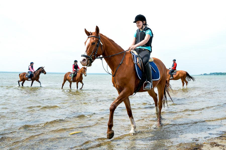 BILDEXTRA – Full galopp på stranden