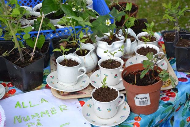 Plantor och prylar på trädgårdsloppis