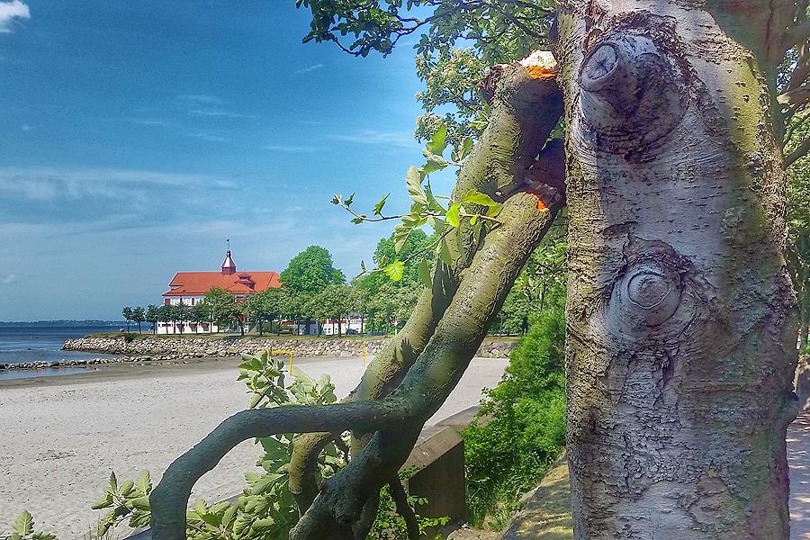 Vind och värme går hårt åt stadens träd