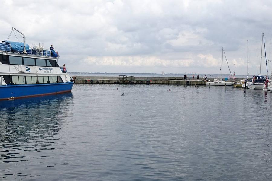 Nyfiket simmade delfinen runt under en halvtimmes tid i Bäckvikens hamn. Foto: Måns Back Nilsson.