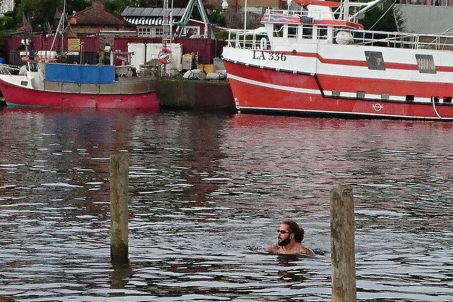 Han simmade med delfinen i hamnen