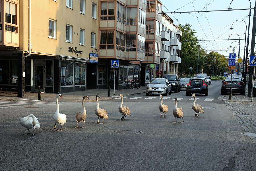 Från Säbygatan svängde familjen ut på den hårt trafikerade Eriksgatan...