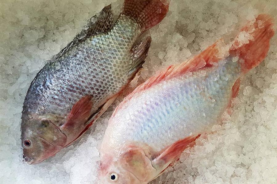 Fiskodling på industriområdet upphör