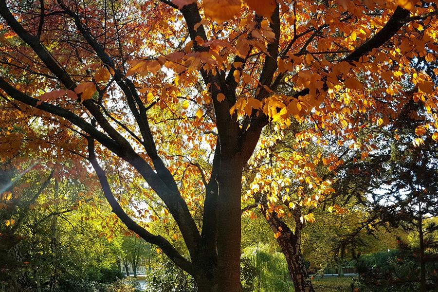 Hösten kommer med kulturlov