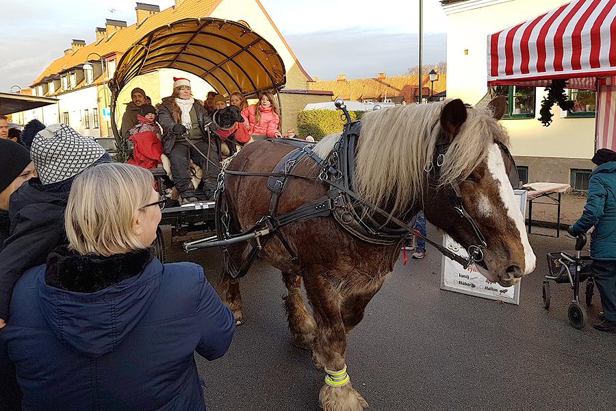 Ett alltid lika populärt inslag är när hästen och vagnen snirklar sig genom folkmassorna.