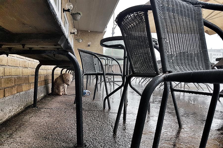 Miljonregn över Häljarp