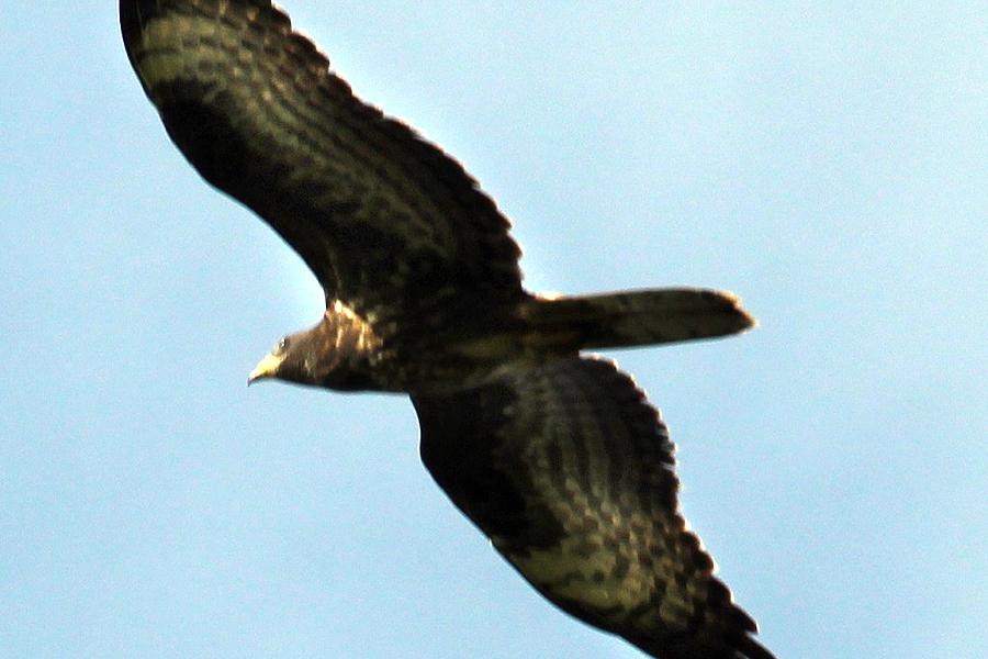 Fågel vid Salviken