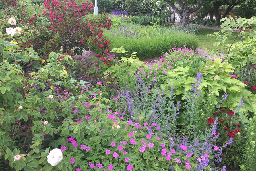 Trädgårdsväxternas kulturhistoria