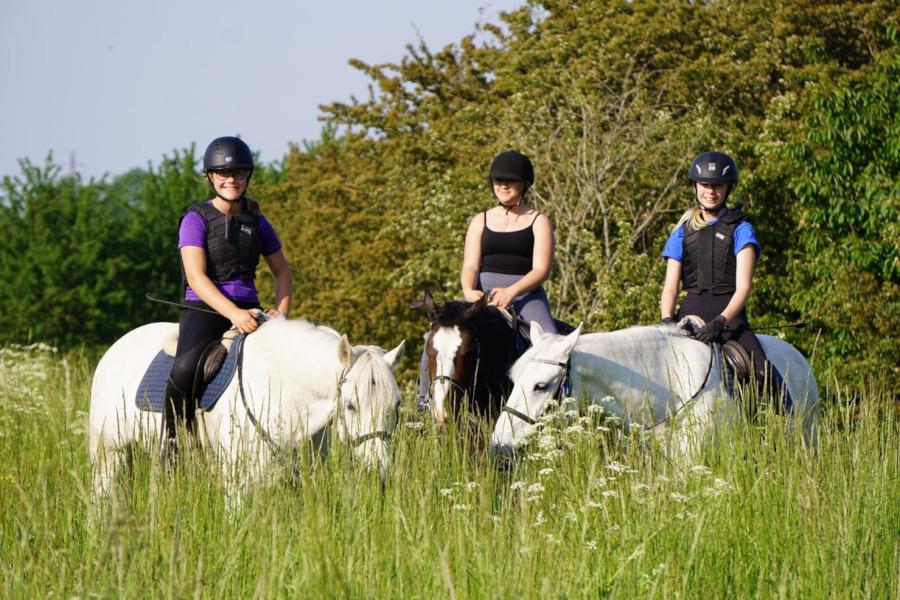 Sommarlov för Viarps hästar