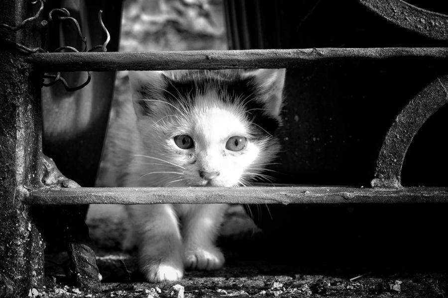 Föreläsning om kattens språk