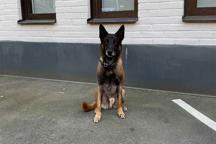 Fler poliser och en hund till Landskrona
