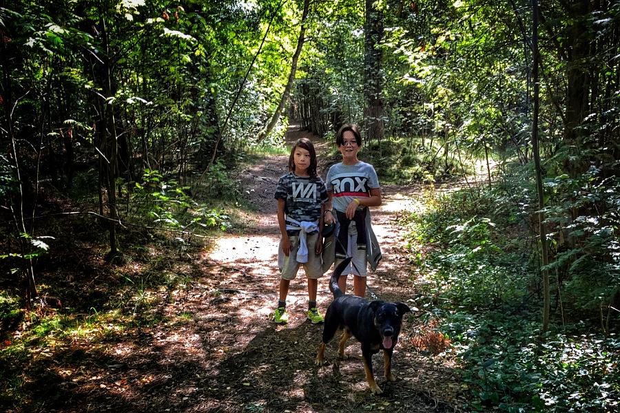 Saxtorpsskogen på väg att bli naturreservat