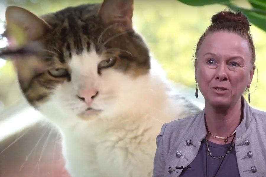 Prisad som kattspråksspecialist